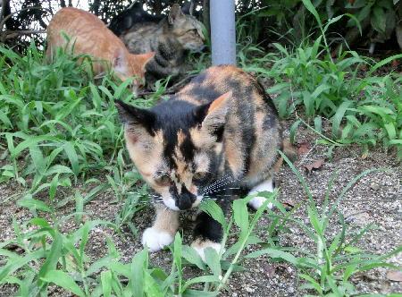 140828-野良猫親子-9