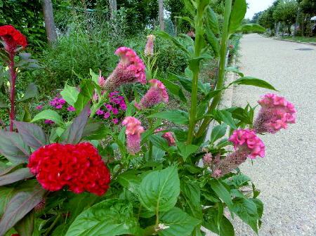 140905-船渡池公園の花-2