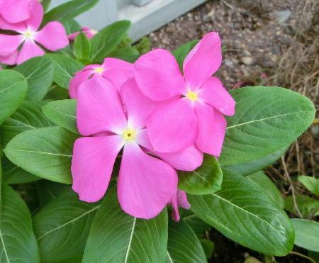 140906-我が家の花1-2
