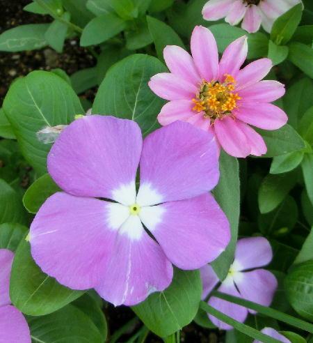 140906-我が家の花1-3