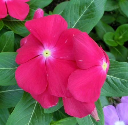 140906-我が家の花1-4
