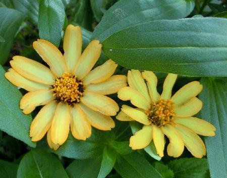 140906-我が家の花1-7