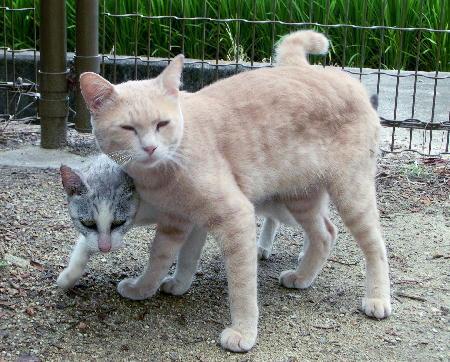 140908-野良猫-3