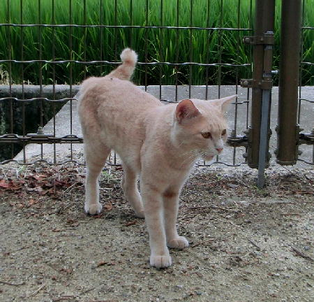 140908-野良猫-7