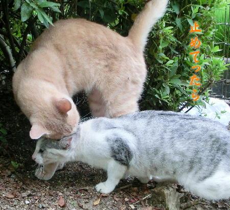 140908-野良猫-4