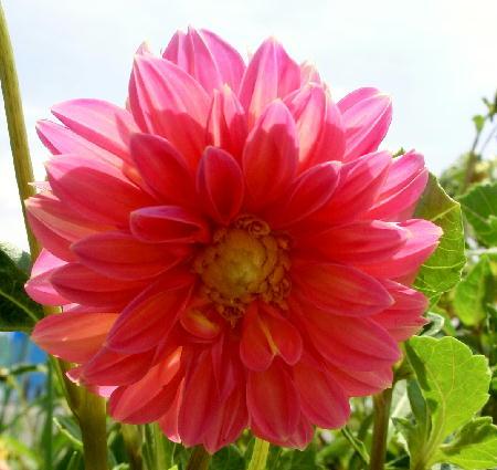140911-我が家の花2-3