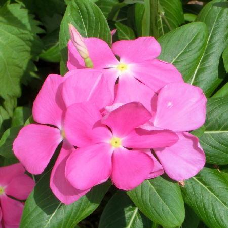 140914-我が家の花1-2
