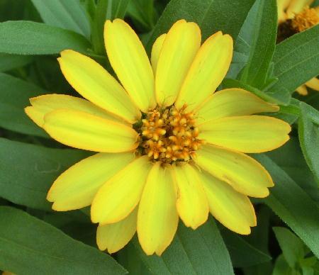 141012-我が家の花1-1