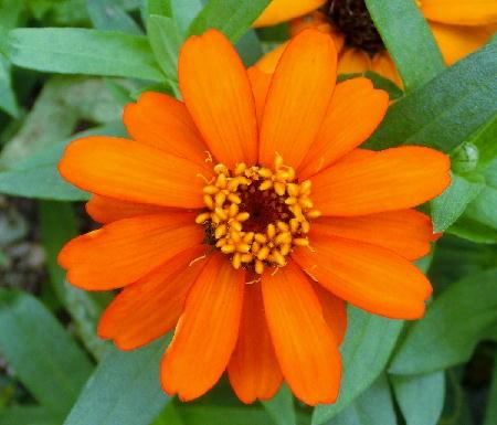 141012-我が家の花1-2