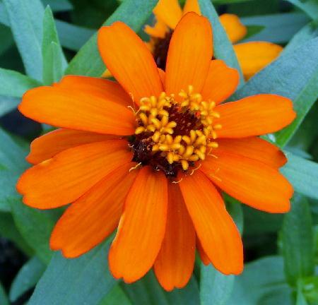 141012-我が家の花1-3