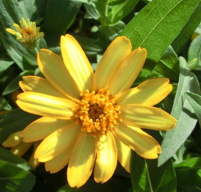141026-我が家の花②-3
