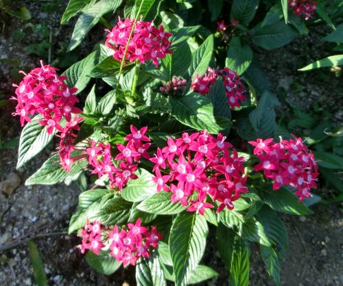 141106-散歩道の花-4