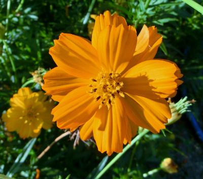 141112-公園の花-1