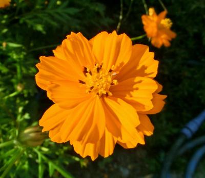 141112-公園の花-2