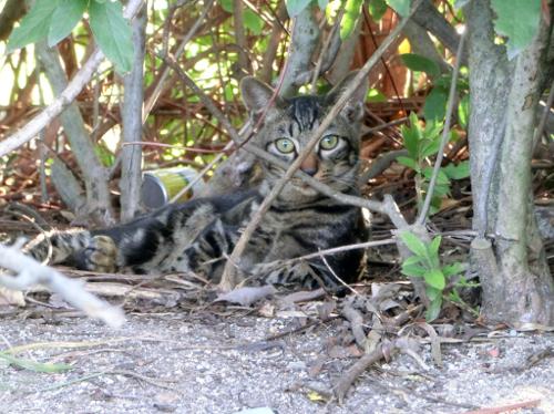 141112-公園の猫さん-1