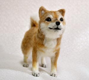 20140428柴犬2 006