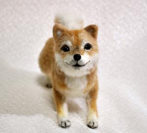 20140428柴犬2 008