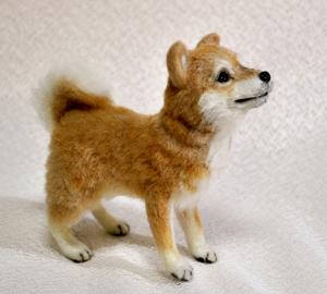 20140428柴犬2 012