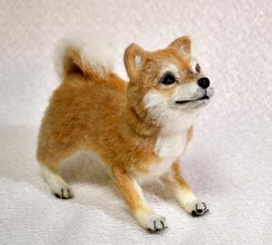 20140428柴犬2 015