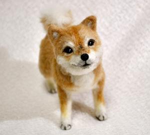 20140428柴犬2 036