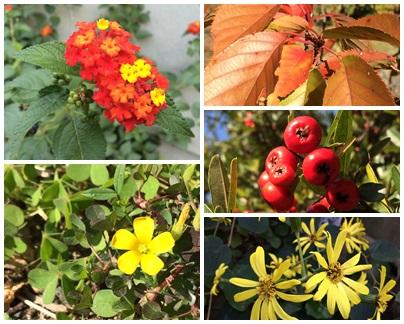 秋の草花など