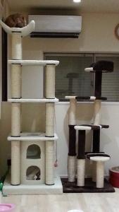 新しいキャットタワーが来たにゃ~!
