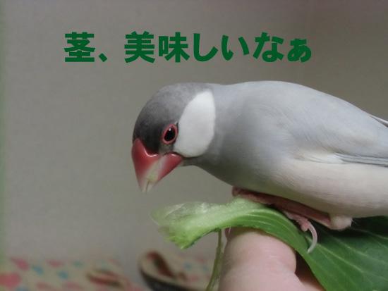 葉っぱは!?
