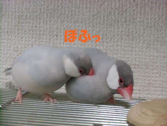 羽繕いもお互いに♪
