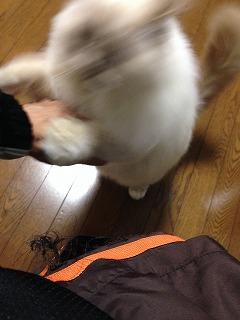 01020130313.jpg