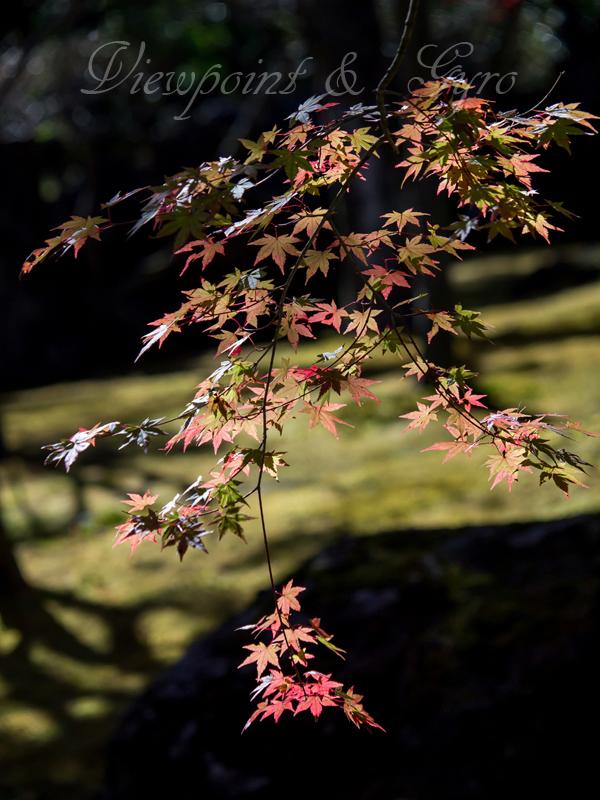 箱根美術館の紅葉 B