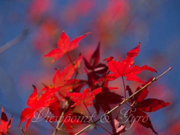 箱根美術館の紅葉 C