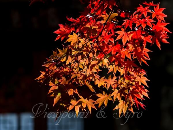 箱根美術館の紅葉 E