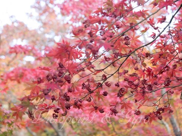 箱根美術館の紅葉 F