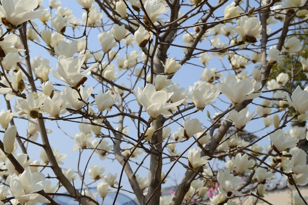 春の一枚(神目部屋の皆さん)_003
