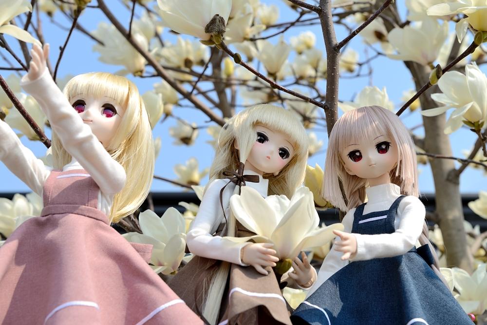 春の一枚(神目部屋の皆さん)_004