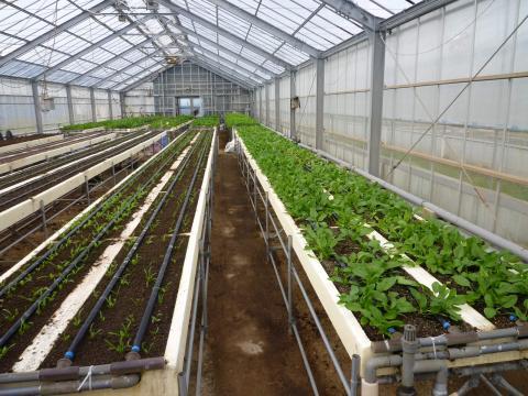 深層水を活用野菜栽培した