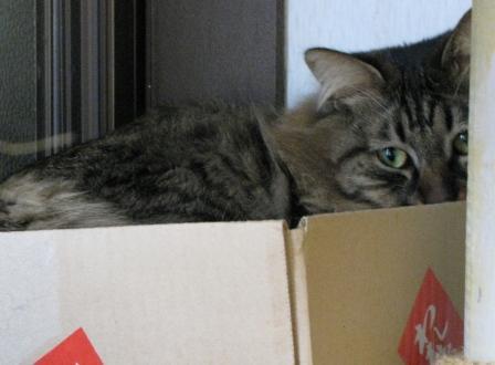 cats2014 031