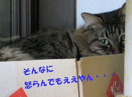 cats2014 032