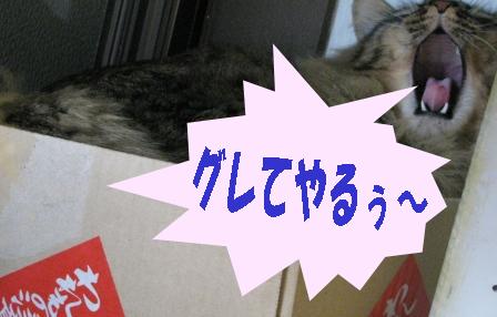 cats2014 033