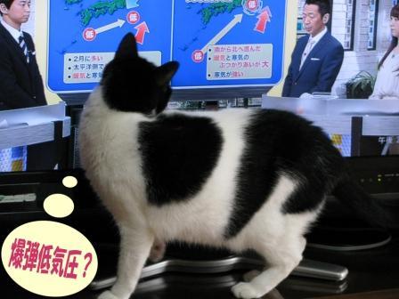 cats2014 036