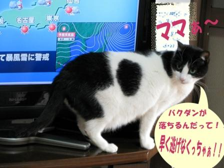cats2014 037