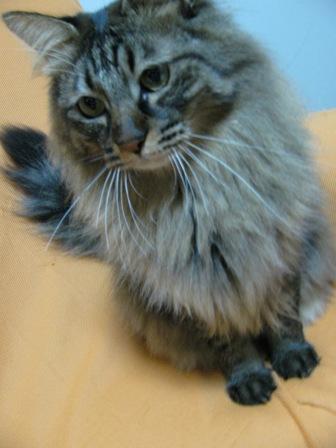 cats2014 038