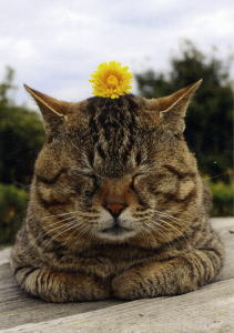 cat_24.jpg
