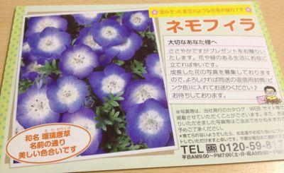 定番の花の種プレゼント