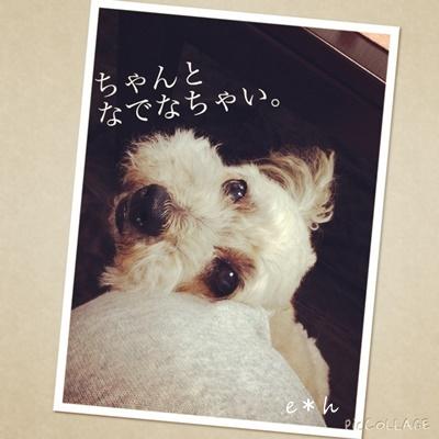 IMG_7131blog.jpg
