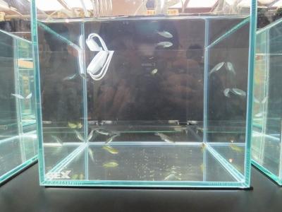 ピュアブラックラメ