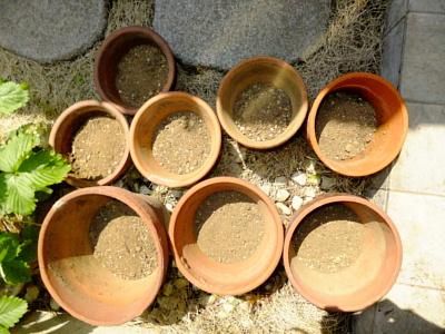 植木鉢 8ヶ