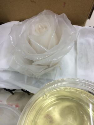 whiterose06.jpg