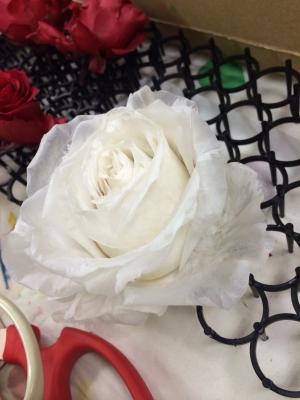 whiterose08.jpg