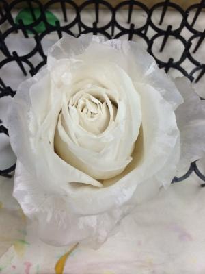 whiterose09.jpg